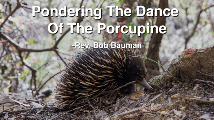 Pondering The Dance Of The Porcupine